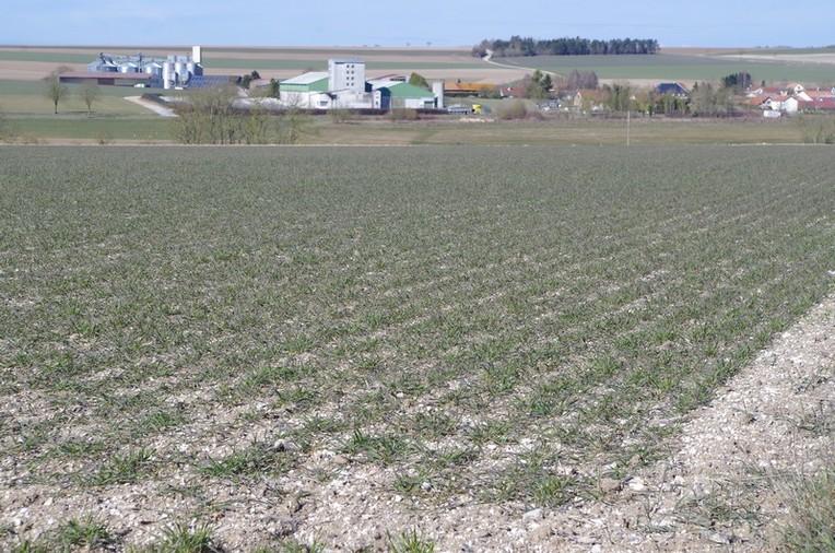 Parcelle de blé lors du dégel le 5 03 2018